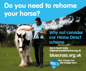 Blue Cross 2020 A (North Wales Horse)