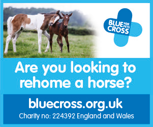 Blue Cross 2020 B (North Wales Horse)