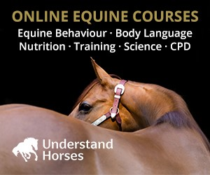 Understand Horses (North Wales Horse)